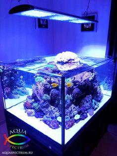 Морской аквариум объёмом 900 литров