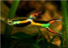 Freshwater Fish - Find incredible deals on Freshwater Fish and Freshwater Fish accessories. Let us show you how to save money on Freshwater Fish NOW! Tropical Freshwater Fish, Tropical Fish Aquarium, Freshwater Aquarium Fish, Planted Aquarium, Guppy, Beautiful Tropical Fish, Beautiful Fish, Cool Fish, Salt Water Fish