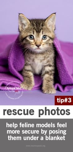 HeARTs Speak member tip: when photographing adoptable cats, help them feel more secure by positioning them under a blanket.