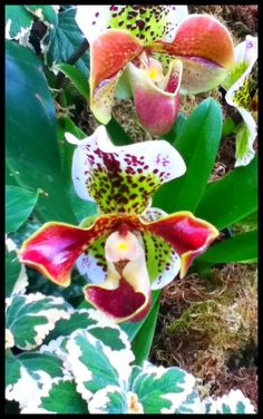 more awesome orchids