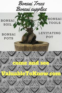 Get the info you need to start a bonsai tree. Great quality established trees, pots, & tools for the beginner or the experienced bonsai artist. Bonsai Tools, Winter Time, Get One, Planter Pots, Decorative Boxes, Great Gifts, Trees, Training, Artist