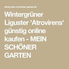 Wintergrüner Liguster 'Atrovirens' günstig online kaufen - MEIN SCHÖNER GARTEN
