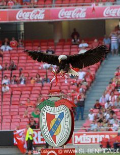 Benfica Eagle approaching to reach her position - SLB Football Is Life, Football Soccer, Soccer Teams, Football Stadiums, Football Players, Big Love, First Love, Everton Fc, You'll Never Walk Alone