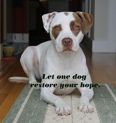 Don't Judge Pit Bulls. http://www.pbrc.net