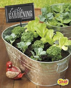 Edible Gardening Presents a guide to homegrown produce gardening and provides instructions for eleven garden projects, including an edible flower garden, a winter garden, an upside-down planter, and a vertical garden. Diy Garden, Edible Garden, Garden Projects, Garden Pots, Winter Plants, Winter Garden, Winter Vegetables, Growing Vegetables, Fresh Vegetables