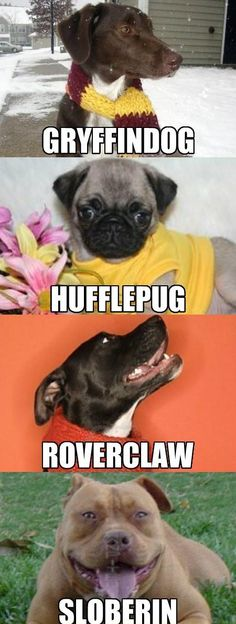 I think I need to knit one of these scarves for my dog.