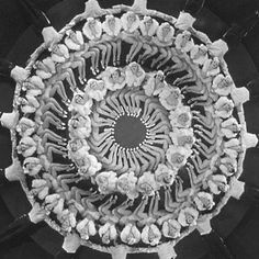 In my Busby Berkeley dreams.....