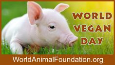 #worldveganday