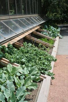 Using the side of a building for cold frames. Microclimate genius!