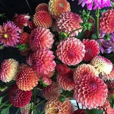 We can't stop oo-ing & ah-ing over these #beautiful #blooms!  #bethechange support #consciousliving #ecofashion #nature #ecofriendly #naturalbeauty #eco #chicago #naturelovers #flowers #texture #naturegram #floweroftheday #naturelover #flowersofinstagram #inspiration #flower #bloom #floralfix #flowerstagram #thursdaythoughts #ethicalfashion #sustainablefashion #beautifulplanet #thatsdarling #explore #naturephotography : Thanks @real_simple & @teensaflowers for the inspiration today!