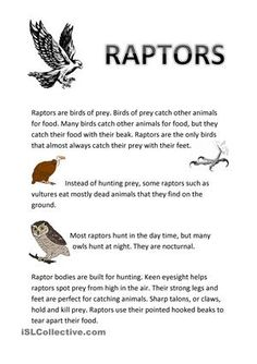 Raptor Bird Of Prey, Birds Of Prey, Hawk Facts, Couple Stuff, Almost Always, Raptors, Esl, Vocabulary, Feathers