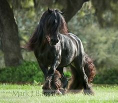 Stock Photos Horses, Equine Photography and Video by Mark J. Beautiful Horse Pictures, Beautiful Horses, Animals Beautiful, Large Animals, Cute Animals, Brabant Horse, Fancy Chickens, Gypsy Horse, Work Horses