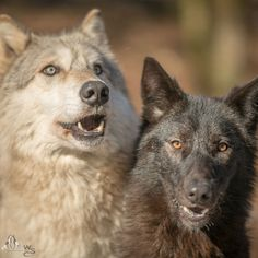 Chitto & Taima (back in the day, when Taima was too young to revolt…) Photo: Rooobert Bayer