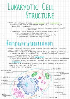 here are some AS biology notes I made yesterday on eukaryotic cell structure. i finished off the diagrams today and i think my notes look so cute! trying to fit an hour of AS in as well as all of my. Science Notes, Science Lessons, Life Science, Science Worksheets, Science Chemistry, Science Curriculum, Science Activities, Science Experiments, A Level Biology