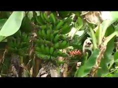 Agroecologia - Agricultura del espíritu...para el espíritu