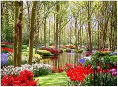 kukenoff gardens, the netherlands... looks like someplace I have been to in a dream