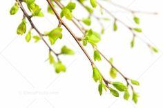 New spring green.  (gallbladder meridian).