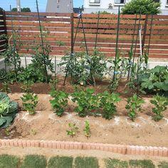 Entrance/庭/畑/家庭菜園/玄関じゃないけど(笑)のインテリア実例 - 2017-07-12 12:34:10 | RoomClip (ルームクリップ) Backyard Garden Design, Exterior, Landscape, Architecture, Plants, Gardening, Vegetable Garden, Arquitetura, Scenery
