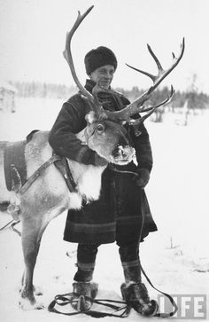 Laplander helping to move reindeer away from Soviet positions during the Finnish Winter Wa, Finland, By Carl Mydans Vintage Photographs, Vintage Images, Lappland, Fictional World, Portraits, Old Photos, Norway, Samara, Winter