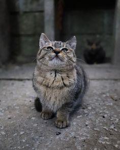 Shiny(Kyoto)/EOS 6D MarkII📷 sur Instagram: 京都 のどこか🐾✨ かわいい仔猫が寄ってきてくれました☺️✨ 後ろのサビ猫は母猫かな👀✨ ・ ・ 2021/01📸 ・ ・ 最新のpost以外へのコメントは 見逃しちゃいます💦 ・ #shinyの京都歩き🚶✨ #日本 #京都 #ねこ #猫 #冬 #ねこすたぐらむ #カメラブ… Cats, Animals, Instagram, Gatos, Animales, Animaux, Animal, Cat, Animais