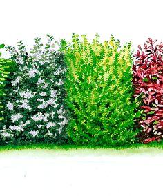 Blatthaltende Hecke | Bäume & Sträucher | Bakker