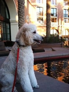 Rover Las Vegas Dog Sitters Friendly Travel Pinterest Pet Sitting Services And Walking
