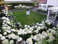 Privacy Hedge, White Gardens, Hedges, Hydrangea, Garden Landscaping, Garden Ideas, Landscapes, Bloom, Backyard
