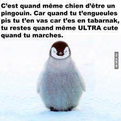 Pingouin – Québec Meme +