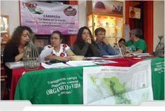 México: Siembra de soya transgénica constituirá desastre socio ambiental en Chiapas