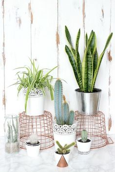 5 HOUSE PLANTS THAT EVEN YOU CANT KILL.
