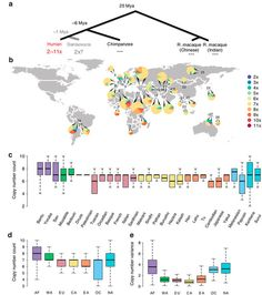 miR-941 sequence copy number variation among human populations.