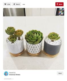 20 kmart hacks Kitchen canisters make a great succulent garden idea! room ideas kmart 20 of the coolest Kmart hacks EVER! - Kmart hacks for the home Succulent Pots, Succulents Garden, Kmart Home, Kmart Decor, Casa Clean, Bathroom Styling, Bathroom Inspo, Bathroom Inspiration, Bathroom Interior