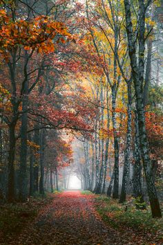 Autumn path (Germany) by Denny Bitte