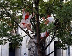 Running of the bulls: The most shocking photographs Pamplona hosts its infamous running of the bulls – part of the annual San Fermin festival – once again  -  July 7, 2017:      women perch on a a tree to watch the bull run