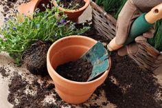 dividir paso a paso plantas -raices