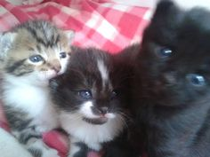 Thanks Vicky for this great pic of her foster kittys