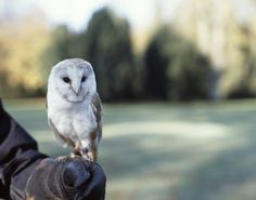 {oh, hello owl} - just hangin' out. :)