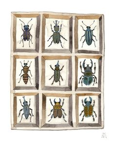 Golly Bard's Drawing Room: Beetles and Weevils