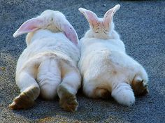 Bunny butts....too cute ;) (reminds me of my dearly departed AnnaBella. She was the same breed & white w/ gray spots. We love & miss you, girl!!!)