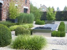 Low maintenance contemporary garden with evergreens and grasses.