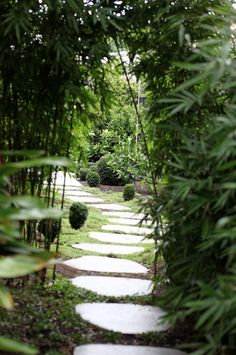 The bamboo gateway creates a living full stop between two different zones of the garden. The bluestone random steppers will appear to float on the greenery or thyme in another six months. Sun Loving Plants, Sun Plants, Garden Landscape Design, Garden Landscaping, Australian Native Garden, Fast Growing Plants, Deciduous Trees, Shade Trees, Shade Garden