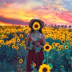 Sunrise in a sunflower garden.