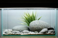 30-minute tank set-up | Features | Practical Fishkeeping