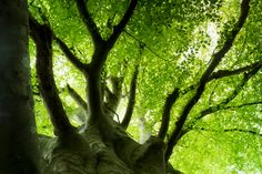 Old man summer tree by Glanfor on Etsy