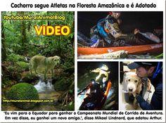 Mural Animal: Cachorro segue Atletas na Floresta Amazônica e é A...