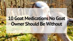 A well stocked medical cabinet can mean the difference between life and death. Keep these 10 goat medications on hand to keep your herd healthy! Feeding Goats, Raising Goats, Cold Medication, Goat Care, Nigerian Dwarf Goats, Goat Farming, Baby Goats, Teaching Biology, Farms Living