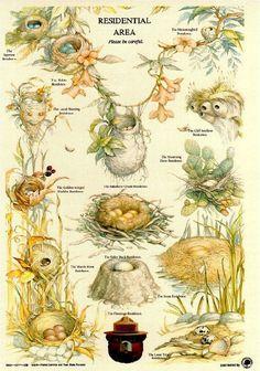 Types of Nests - Smoky Bear poster from the U. Forestry Service Bird activity, Apologia Flying Creatures {pic only! Nester, Bird Identification, Nature Journal, Backyard Birds, Fauna, Wild Birds, Bird Watching, Botanical Illustration, Bird Art