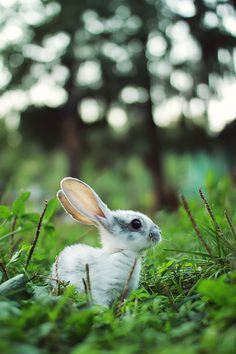 Bunny rabbit,such a cute rabbit and a beautiful picture :) Baby Bunnies, Cute Bunny, Tiny Bunny, Easter Bunny, Beautiful Creatures, Animals Beautiful, Baby Animals, Cute Animals, Mundo Animal