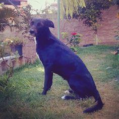 Maryjane minha modelo preferida #instapet #dog #linda #blogger