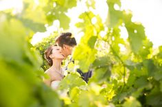 Hiding in the vines at Brynne Vineyard; a vineyard wedding venue in Brixworth, Northamptonshire. Vineyard Wedding Venues, Unusual Wedding Venues, Wedding Reception, Civil Wedding, California Wine, Wine Country, Vines, How To Memorize Things, Marriage